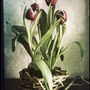 afternoonbedroomtulips1