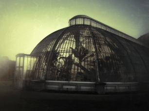 GOLDEN HOUR AT THE PALM HOUSE