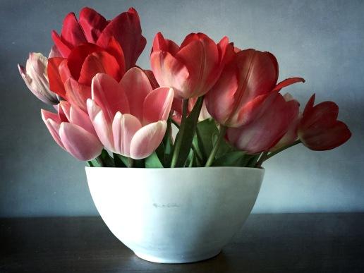 Tulip Lips