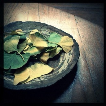 GINGKO STILL LIFE