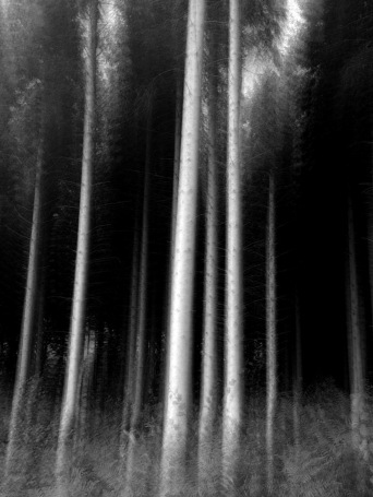 The Forest, East Sussex